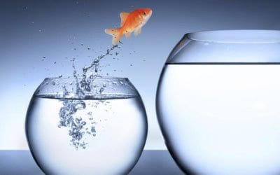 Career Transition – The Leap from Now to Next